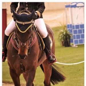 cavallo-51