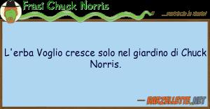 l-erba-voglio-cresce-solo-giardino-chuck-norris-124814